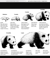 The full generation of the Giant Panda🐼🐼