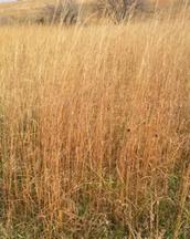 Experiencing The Prairie