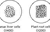 Make up of cells