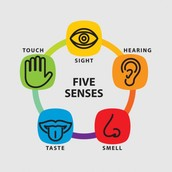 Your Five Senses!