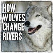 Why Should I Care About Wolves?