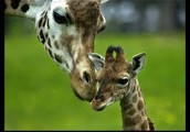 You will be amazed at our new zoo loads of animals loads of fun