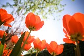 Comienza la Primavera
