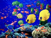 Scuba Dive!!
