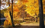 Deciduous and Coniferous forests