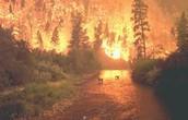Florida everglade wildfire