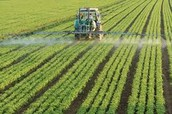 18. Pesticides- what are they, how do they adversely affect the environment, and how does this create problems with the genetic diversity in crop production.