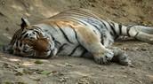 How they sleep