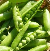 Green Pea Plant