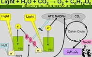 Equations of photosynthesis