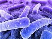 ¿cómo son las bacterias?
