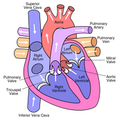 Labeled Heart