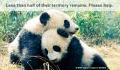 Destruido habitat de los animales