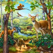 Animals of the forests
