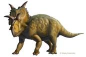 Pentaceratops sternbergii