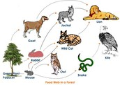 Here is the Definition of a Food Web