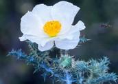 flower from the southwest region