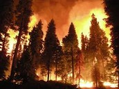 Conifer Forest Fire