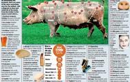 external parts of a pig