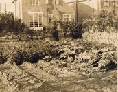 The Start of Victory Gardens