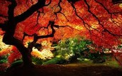 Trees = Healthy Environment