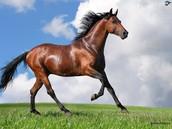 4 H 4 Horses