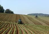 Drawbacks of GMOs on the Enviornment