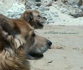Curso Animal Communicator y conciencia animal en Barcelona