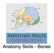 Anatomy Tool