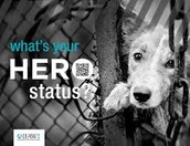 LET'S HELP THE IFAW!