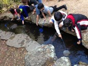 Digging for invertebrates in the river!