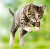 The cat jumps in garden.
