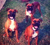 Our dogs, Coach, Piper, and their best friend, Barbosa