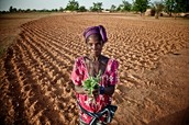 Food Shortages in the Sahel