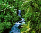 כמות משקעים רבה ביערות גשם