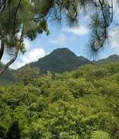 Mount Tomanivi