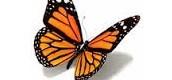 The Butterfly Position By: Caroline Bowen, PhD