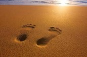 What is an Eco Footprint