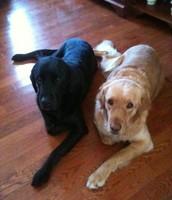 Yo tengo dos perros