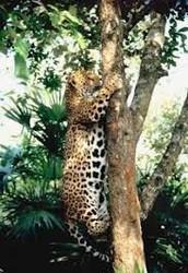 predator/ prey relationship