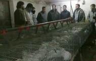 Fundamentos zootécnicos