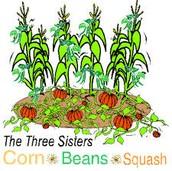 Corn,Beans,Squash