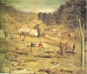 tents on the goldfields