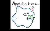 A Amoeba