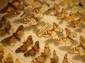 Specimen Collection