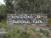 Coming to Kosciusko national park you could learn many things