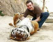 tigers are not that bad