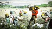 slavery was the cheapest form of labor cotton farmers simply acquired more slaves.
