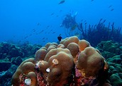 Coral reefs once thrived
