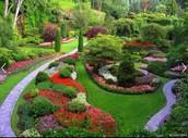 I love my garden (:😍